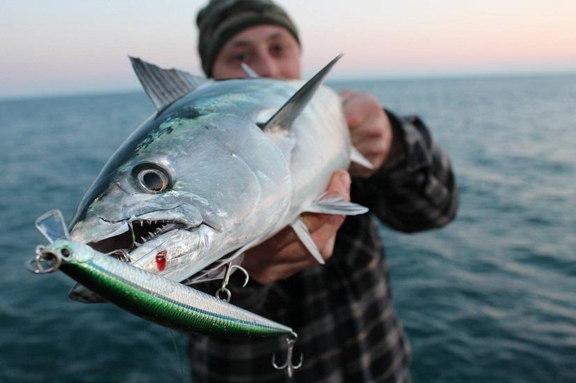 Pesca de bonitos a spinning