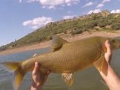 Vídeo de pesca: Pescando black bass y barbos en Cijara con cucharilla