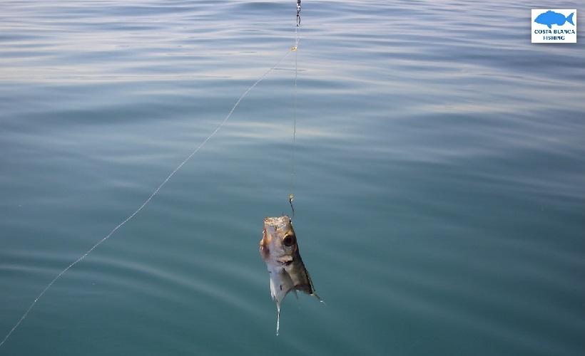 pesca con cebo vivo