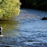 Pezcador al día, principales noticias de pesca (mayo 2016, 3)