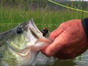 Vídeo de pesca: Pesca de black bass a mosca