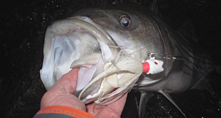pesca con señuelos bucktalis jigs