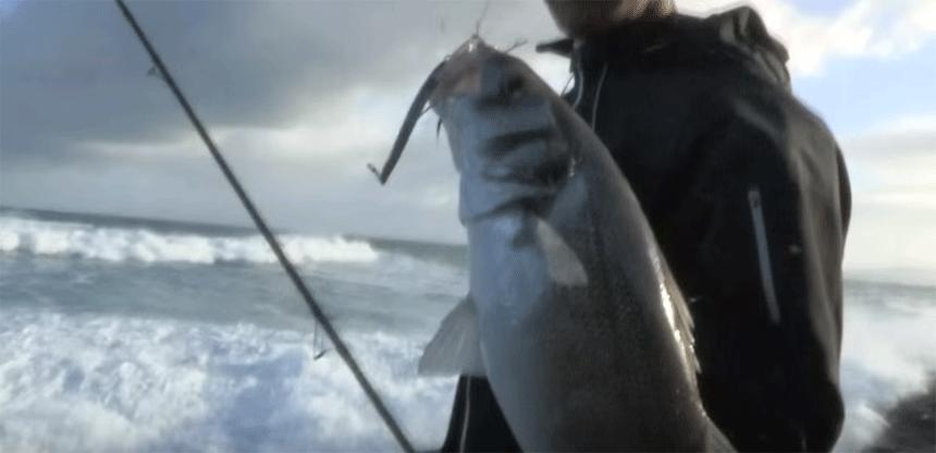 chivo-pesca