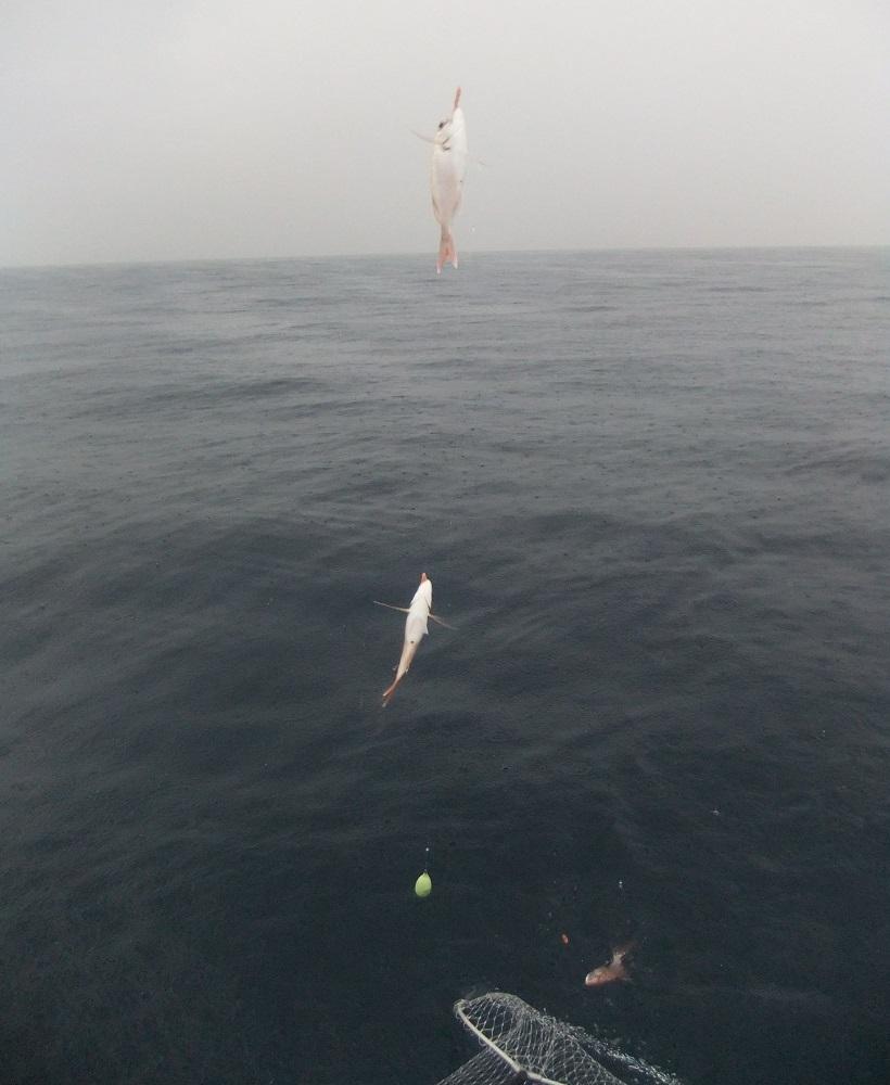 la pesca de brecas
