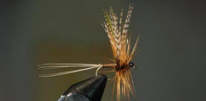 Rhitrogena aurantiaca la pequeña mosca aliada para la pesca en verano