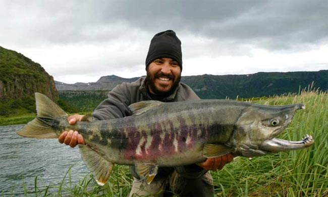 salmon-chum-o-perro
