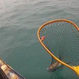 Vídeo de pesca: Sepias desde kayak