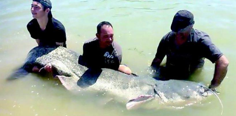 Pezcador al día, principales noticias de pesca (Agosto de 2016, 1)