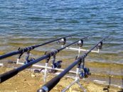 Pesca de carpas con veleta: aparejos, cebos y técnica