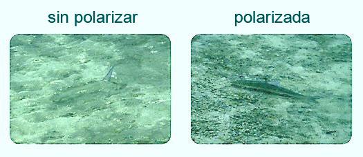polarizada