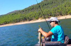 Cómo pescar barbos a spinning: una introducción