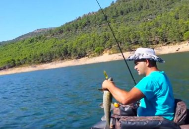 Vídeo de pesca: Barbo comizo en Cijara con cuchara ondulante