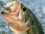 Montaje Carolina para vinilos, una combinación letal en aguas profundas
