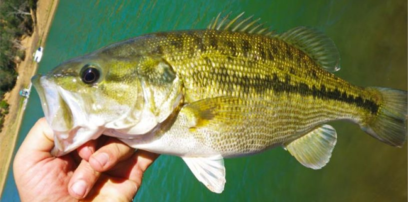 Pesca de Black Bass con técnica drop shot