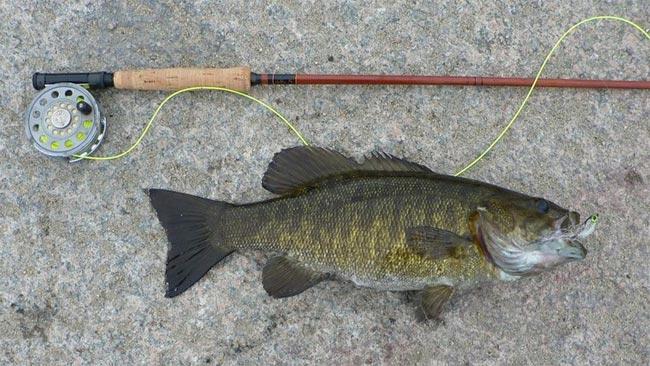 bass-streamer
