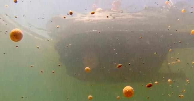 cebado-pesca-lance