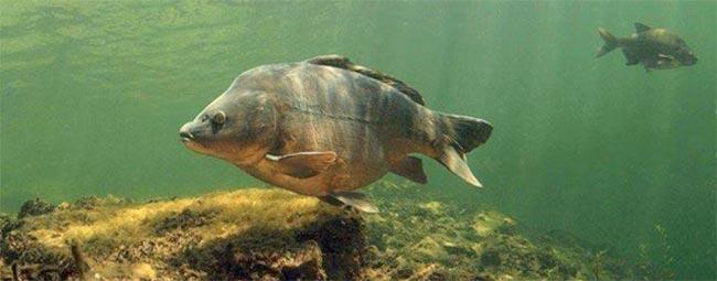 cebado-pesca