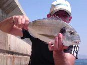 Vídeo de pesca: Doradas con mejillón