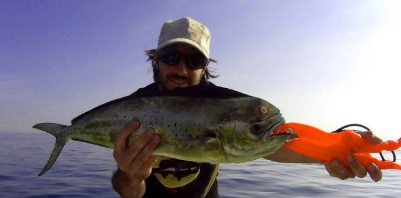 Cucharilla Pulpo Luky de Mapso, letal en la pesca de llampugas