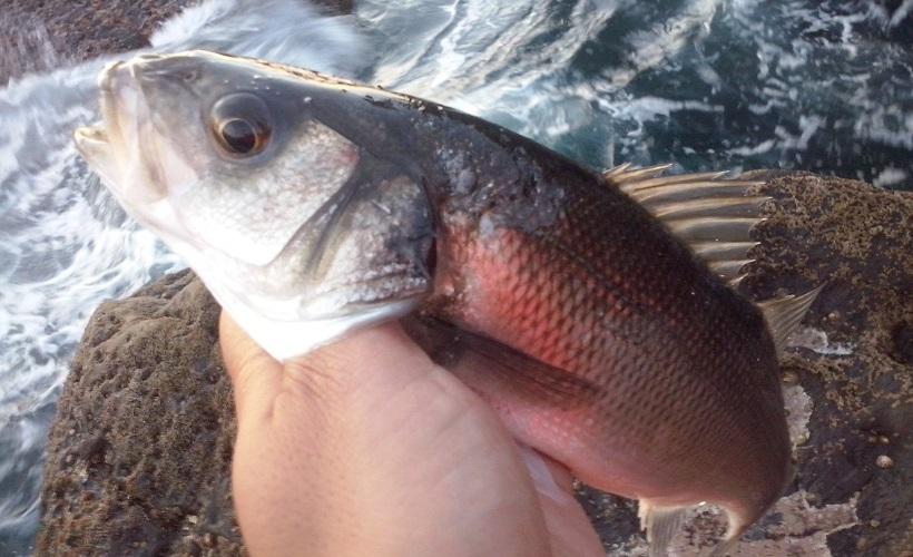 Cada pesquero tiene su momento más propicio
