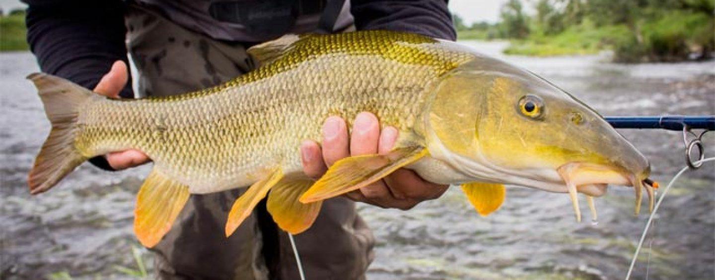 Pezcador al día, principales noticias de pesca (octubre 2018, semana 1)