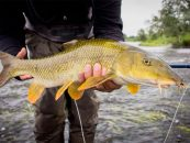 Qué podemos pescar a mosca cuando llega el frío