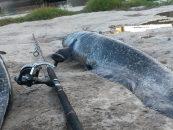 Sacrificio in situ de las capturas, Aragón abre el camino sobre un futuro complicado para pescadores y competiciones