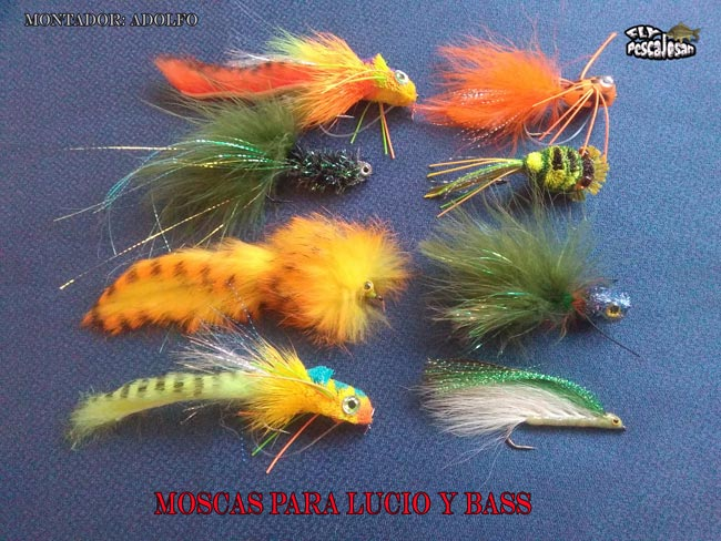 moscas-lucio-y-bass
