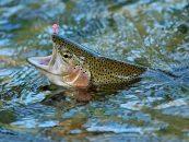 Se aprueba la modificación de la Ley de Patrimonio Natural y Biodiversidad