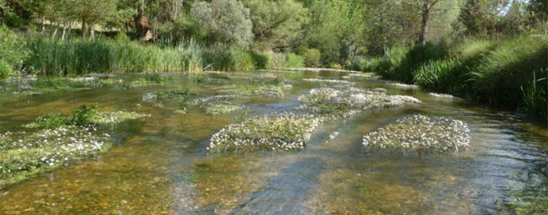 Los mejores ríos trucheros de España (X): El río Ucero