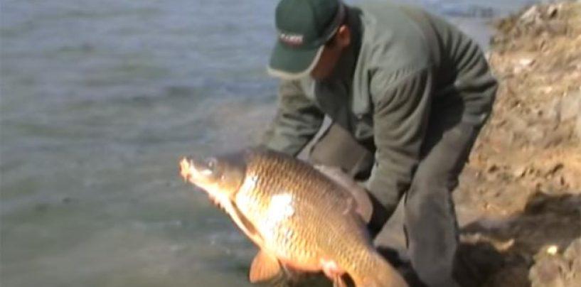 Puntos clave para escoger una caña para la pesca de ciprínidos