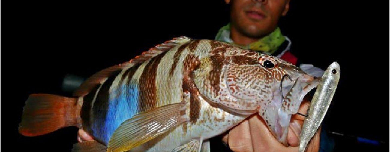 Spinning de segunda, cuando la pesca de especies marinas secundarias nos garantiza jornadas de diversión
