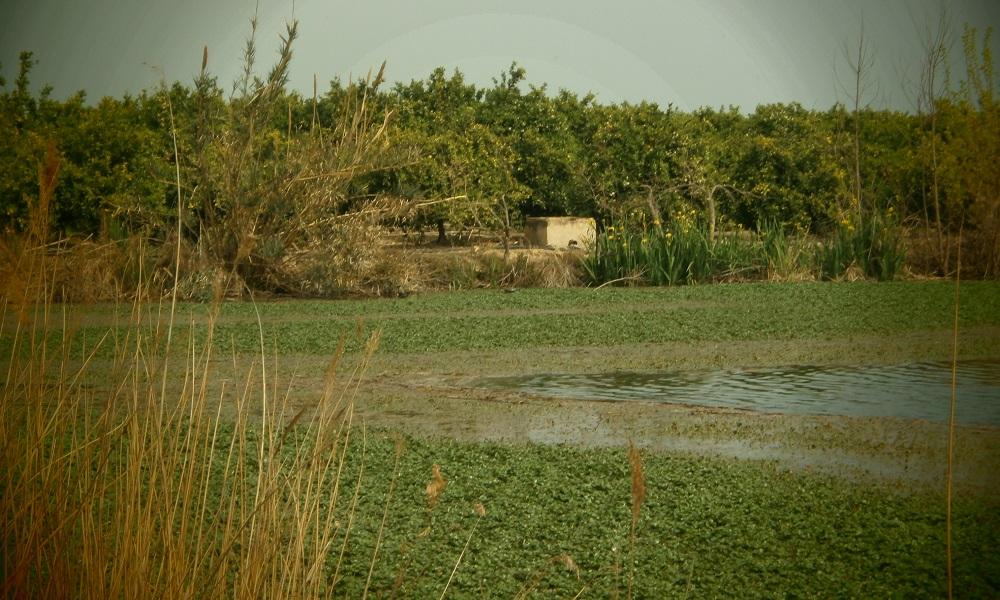 Vegetación acuática, enemigo de la pesca y oportunidad para usar Hollow Baits
