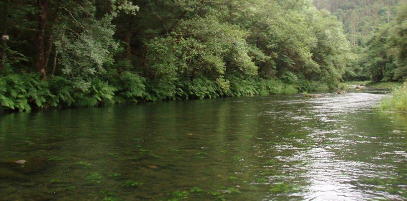 Pesca en el Coto de Ombre en el Rio Eume