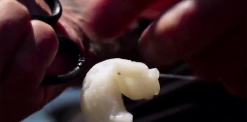 Como presentar la pata de pulpo como cebo