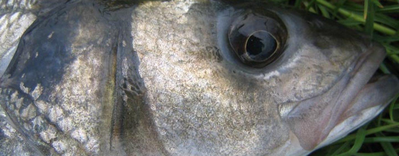 El mundo al revés: Cuando el depredador se convierte en presa
