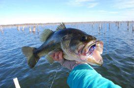 Cómo localizar los black bass en los días más fríos