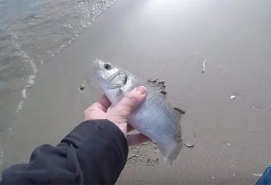 Vídeo de pesca: Montaje para pescar con raglou