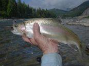 La pesca de la trucha en Montana (III): El río Clark Fork