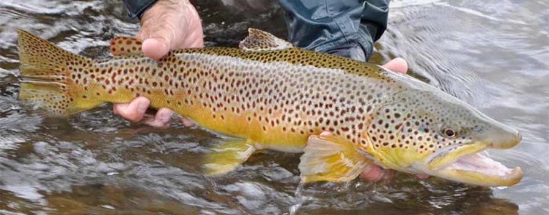 La pesca de la trucha en Montana (I): El río blackfoot, los tramos altos