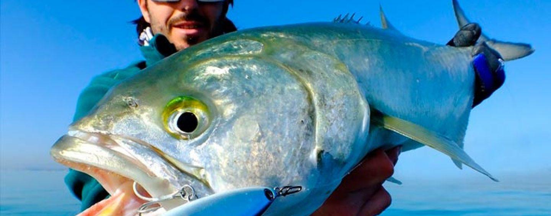Estrategias para la pesca a spinning en pajareras desde embarcación