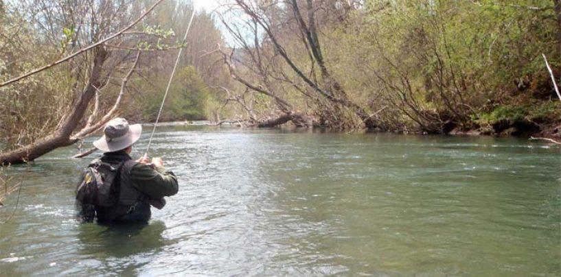 Pezcador al día, principales noticias de pesca (abril 2018, 2)