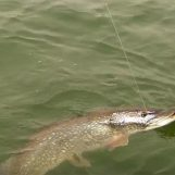 Vídeo de pesca: Grandes lucios con cucharilla