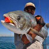 Roosta Popper: el artificial de spinning marítimo que roza la perfección