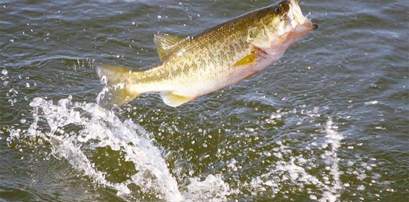 Vídeo y consejos de pesca: La pesca del black bass en junio