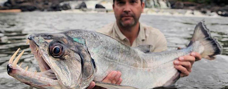 Pesca de payaras a spinning, el depredador sudamericano que te pondrá a prueba