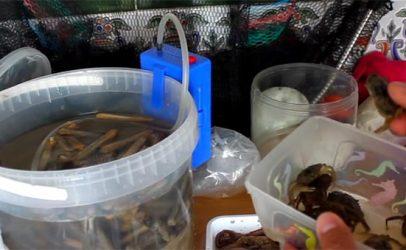 Vídeo de pesca: Todas las opciones de cebos para doradas