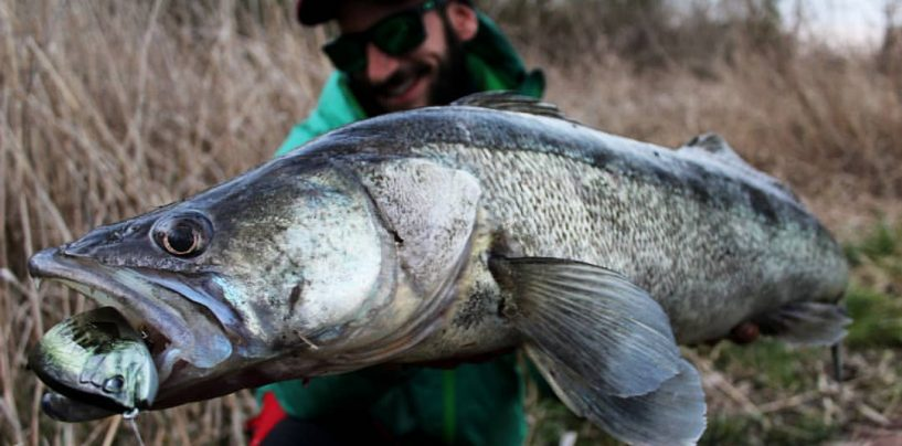 Grandes capturas pescando con swimbaits