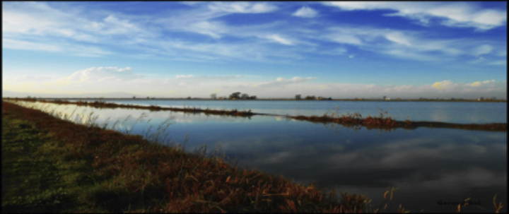 Carpfishing en el delta del ebro