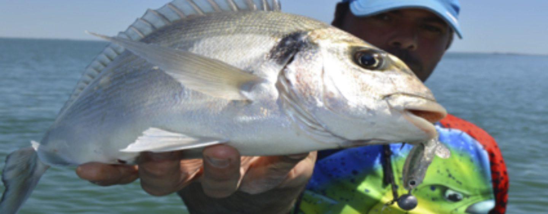 Conoce los puntos clave para la pesca de doradas a spinning, la gran desconocida